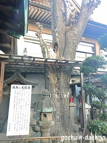 松山神社(名古屋)の長寿の大銀杏