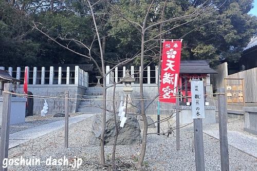 梶の木(沓掛諏訪神社)
