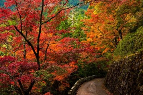 奈良吉野の紅葉