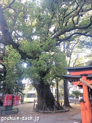 若宮八幡社(豊田市駅すぐ)の楠(市指定天然記念物)