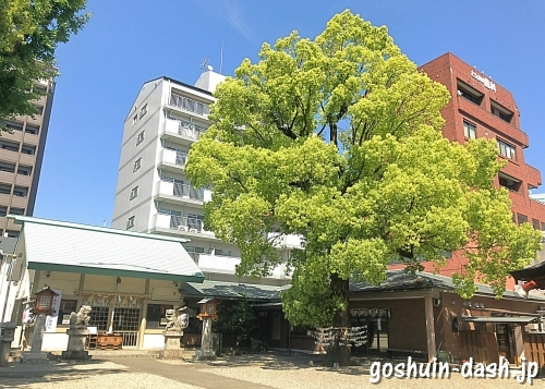 赤塚神明社(名古屋市東区)の社務所(御朱印の受付場所)とクスノキ