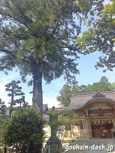 針名神社の御神木(スギの木)
