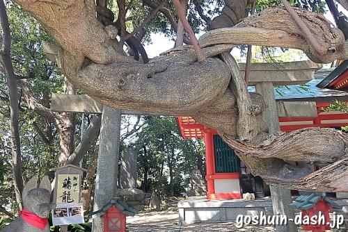 豊藤稲荷神社の御神木(藤龍)