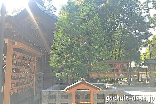 針名神社の御縁木(ヒノキとスギ)