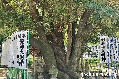 六所龍神社社祠裏の巨木(矢田六所神社)