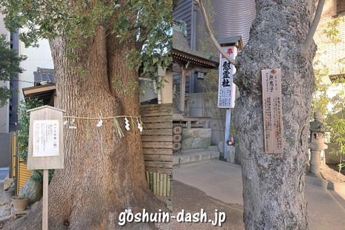 菅生神社(愛知県岡崎市)の見どころ(大楠・むくろじの木)