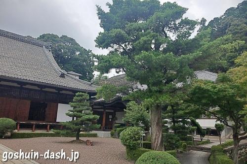 瑞泉寺(愛知県犬山市)のイヌマキ