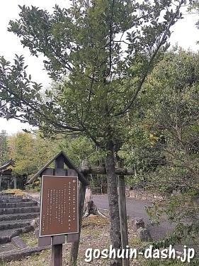 梛(ナギ・豊田毘森神社)