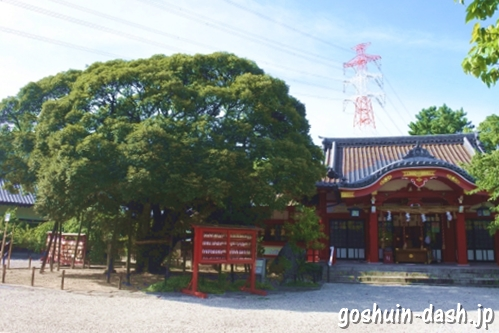 椎の木と社殿(刈谷市原稲荷神社)