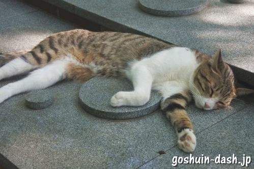 長楽寺(名古屋市南区)境内の猫