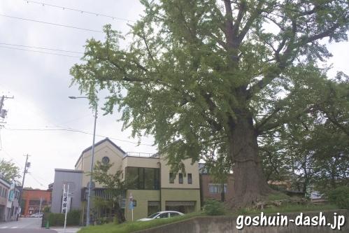 津島神社(愛知県津島市)御神木の大銀杏(御旅所跡)