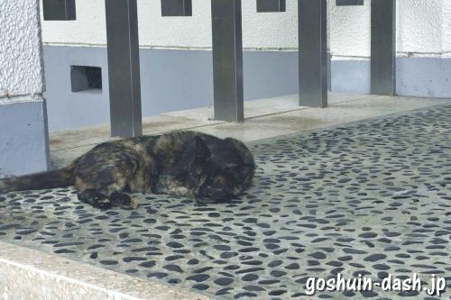 龍泉寺(名古屋市守山区)境内の猫