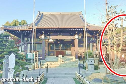 常泉寺(名古屋)本堂と庫裏(御朱印受付場所)