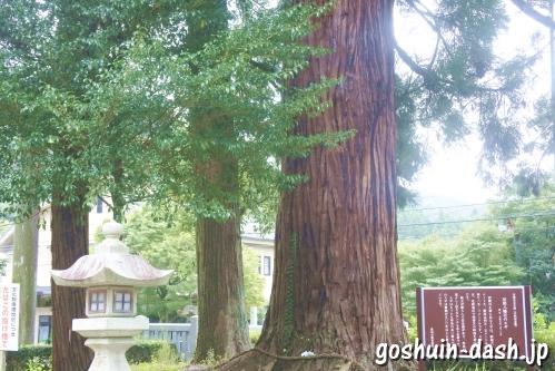 足助八幡宮(愛知県豊田市)の大杉(スギ)