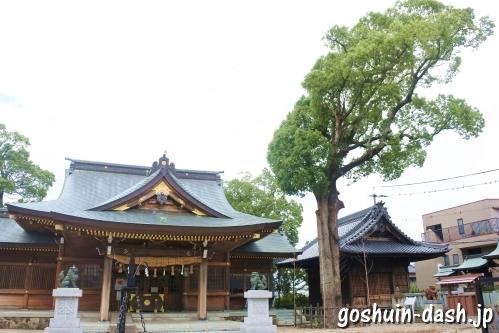 天地社(日進市赤池町)巨木