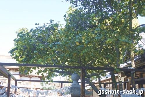 味鋺神社(名古屋市北区)夫婦椿
