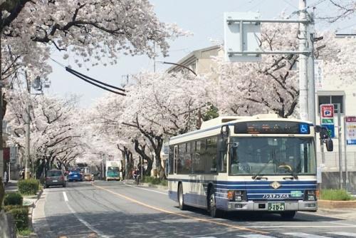 桜並木を走る名古屋市営バス(市バス)