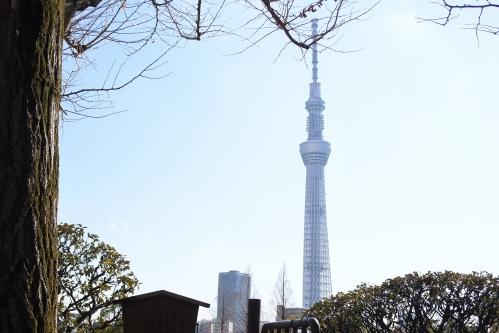 東京スカイツリー(待乳山聖天 本龍院境内から)