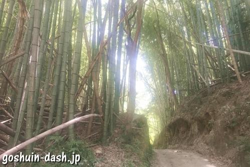 伊射波神社(三重県鳥羽市)竹林