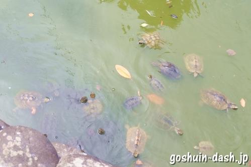 川名弁天社(名古屋川原神社)の亀