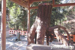 伏見稲荷大社(京都市伏見区)根上りの松