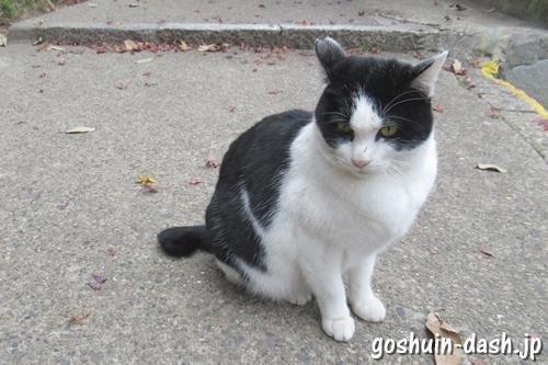 伏見豊川稲荷本宮(京都市伏見区)猫
