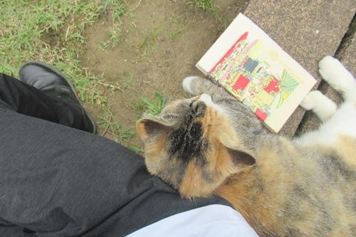 玉野御嶽神社(愛知県春日井市)猫と御朱印帳と僕